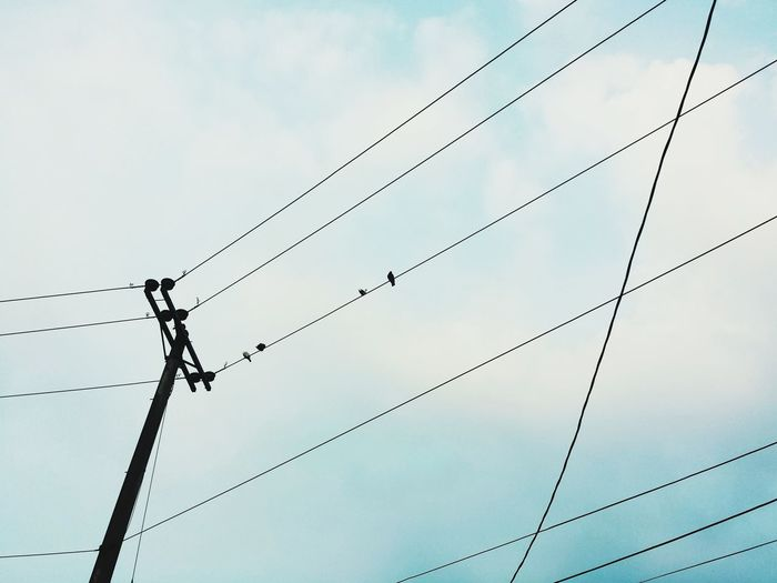 Birds Birds Power Line  Cable Flock Of Birds Birds On Power Wires Birds On Power Lines Birds On Powerlines Bird Photography Birds Of EyeEm  Birdwatching