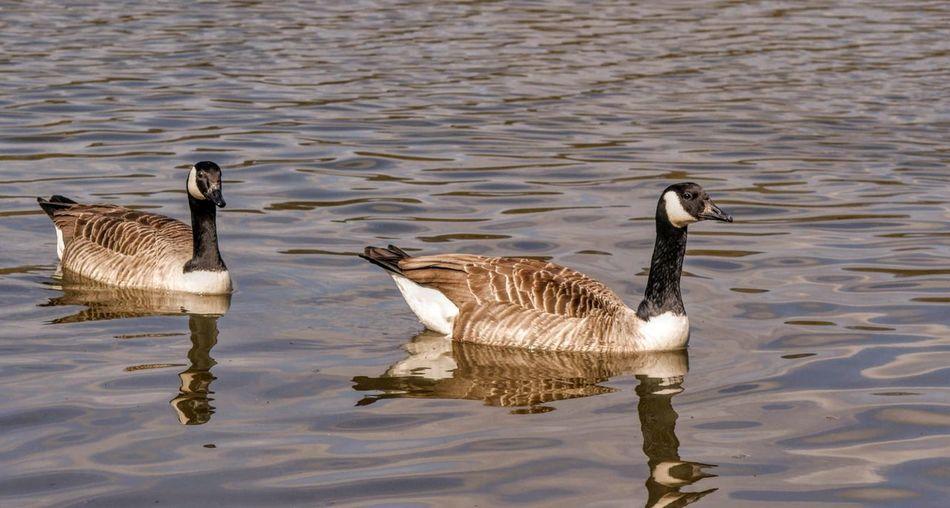 Water Bird Lake
