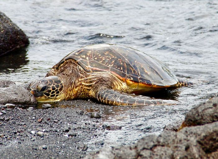 Close-Up Of Turtle On Shore