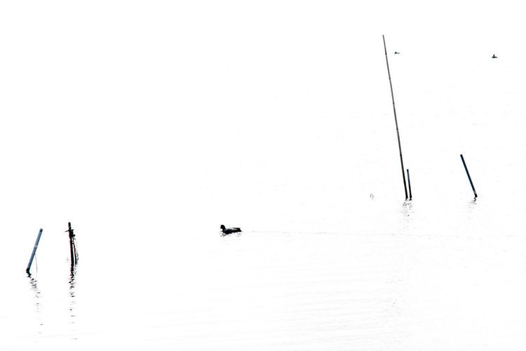 Minimalistic Water Waterfront Bird Group Of Animals Vertebrate Animal Themes Nature Lake Animal Day Animals In The Wild Scenics - Nature Animal Wildlife Beauty In Nature Winter Cold Temperature No People Copy Space Outdoors Sailboat