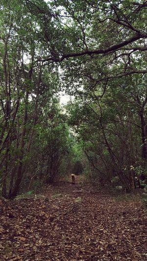Forestwalk Afternoon Nature Mercredi Ballade