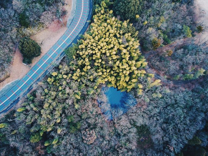 High Angle View Tree Nature Tranquility Outdoors Growth No People Day Beauty In Nature Dronephotography Drone  Aerial View Aerial Shot Aerial Photography Aerospace Industry Power In Nature Vscocam VSCO Road Flying High
