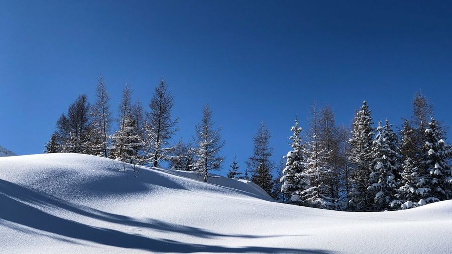 Pine trees on snowcapped mountains against clear blue sky