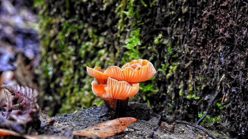 Nature Beauty In Nature Outdoors Day No People Focus On Foreground Growth Close-up Fragility Plant Flower Flower Head Freshness Toadstool Fungus Fungi Mount Field National Park