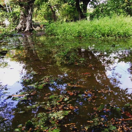 Rain Conversion Gardenintopond Reflections Greengrassofhome Timberlake