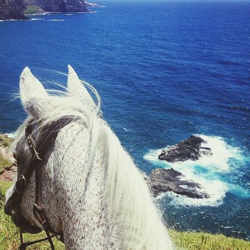 Horseback Horse Riding Horse Maui Endlessview Natural Beauty Enjoying Life