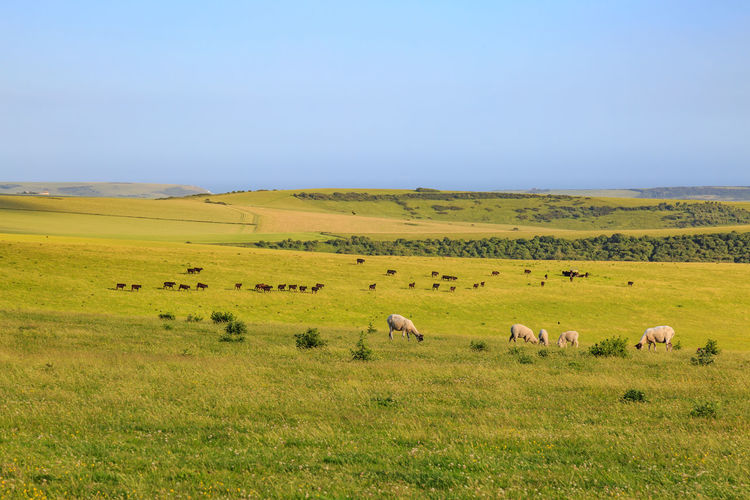 Animals Grazing On Field Against Sky
