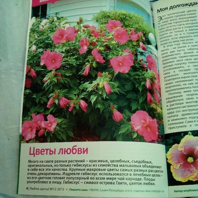 #цветы #цветок #2013 #flower #flowers #journal #2013 #журнал #текст #читаю #чтение Flowers Flower Journal 2013 цветок  цветы читаю чтение Журнал текст