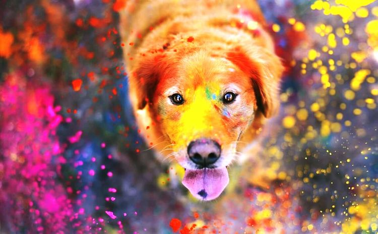 Itsudaipur Festival Of Colors Vijendrapaliwalphotography Love Animal Taking Photos Enjoying Life