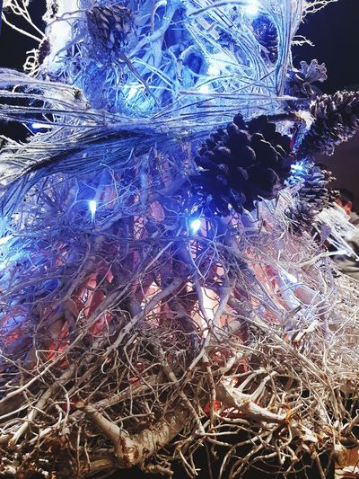 Christmas lights Blue Pine Tree Christmas Lights Christmas Tree Christmas Decoration Christmas