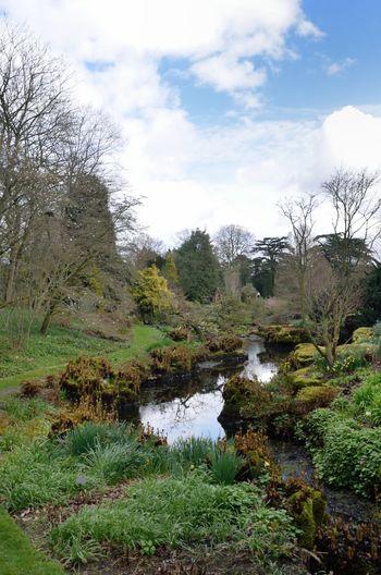 Stream in large garden Beauty In Nature Nature Tranquil Scene Garden Garden Photography Stream Scenics - Nature Landscape