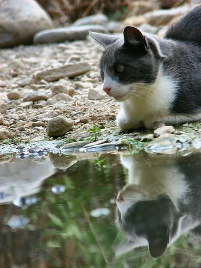 George at the Arroyo Jevar. Cat Cat By Water Cat Watching Cats Of EyeEm Catsoftheday Cat Lovers Cats Cats Lovers  Catsoneyeem Catportrait Cat Reflection Cat♡ George The Cat Pet Portraits