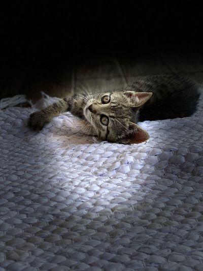 Close-up of cat on bed