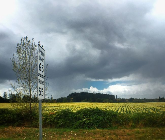Drive By Photography Speed Limit Speed Sign Landscape Field Rural Scene Tranquil Scene Growth Tranquility Farm Scenics Agriculture Cloud - Sky Beauty In Nature Sky Nature Crop  Cloudy Green Color Plant Cultivated Land Day Non-urban Scene The Color Of Business