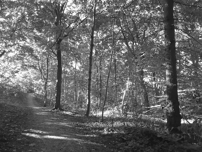 Waldweg bei Seesen . 2015 . Taking Photos Black And White Trees Nature Forest Light And Shadow Summer Silence Way