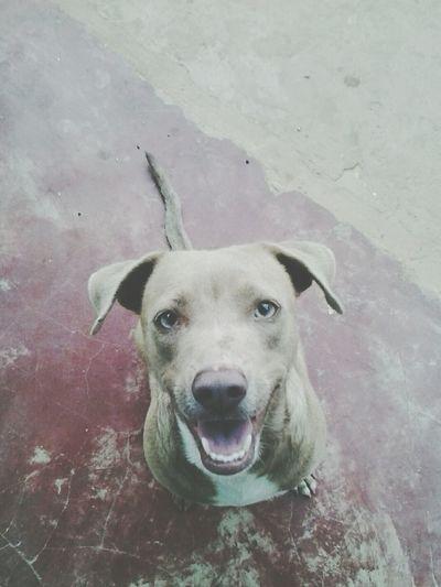 Hi! Lucy♡ I Love My Dog