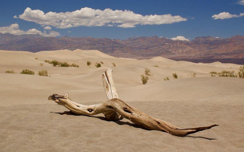 Death Valley Death Valley National Park Desert Dunes Dünenlandschaft Mesquite Flat Sand Dunes USA USAtrip Wüste  Dunescape Dünen Roadtrip Root Wurzel