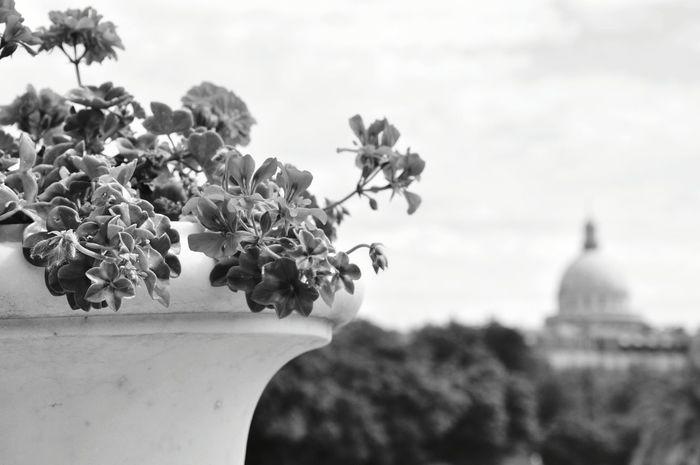 Paris BNW PARIS Park Flower Flower Pot City France Black & White Black And White Blackandwhite