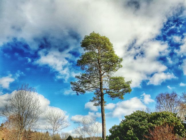 February Showcase Samsungphotography Tree_collection  Sky And Clouds Editing Playing With Filters Proud Alone Strong Pine Taking Photos Nature_collection Naturephotography Fauna Showcase: February Eyeem Whitewall: Landscapes