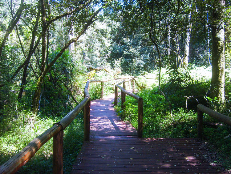 Pathway through a enchanting forest, South Africa. Forest Path Tree Railing Outdoors Nature Day Beauty In Nature EyeEmNewHere