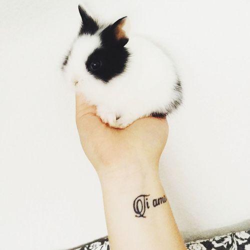 Mon bébé lapin