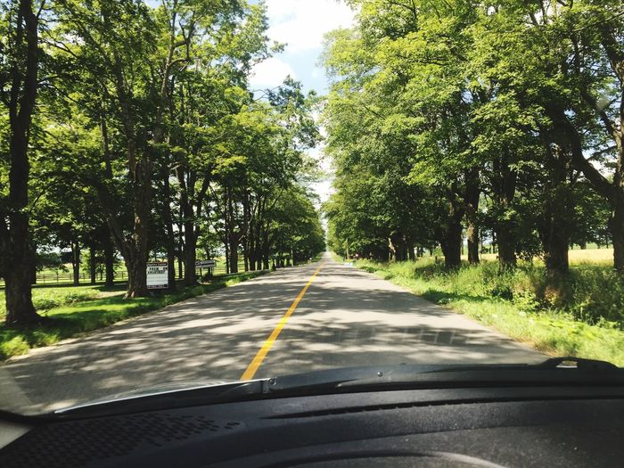 Tree lined road Tree Road Transportation Car The Way Forward Day Windshield No People Nature Car Interior Car Point Of View Growth Land Vehicle Landscape Outdoors Beauty In Nature Sky
