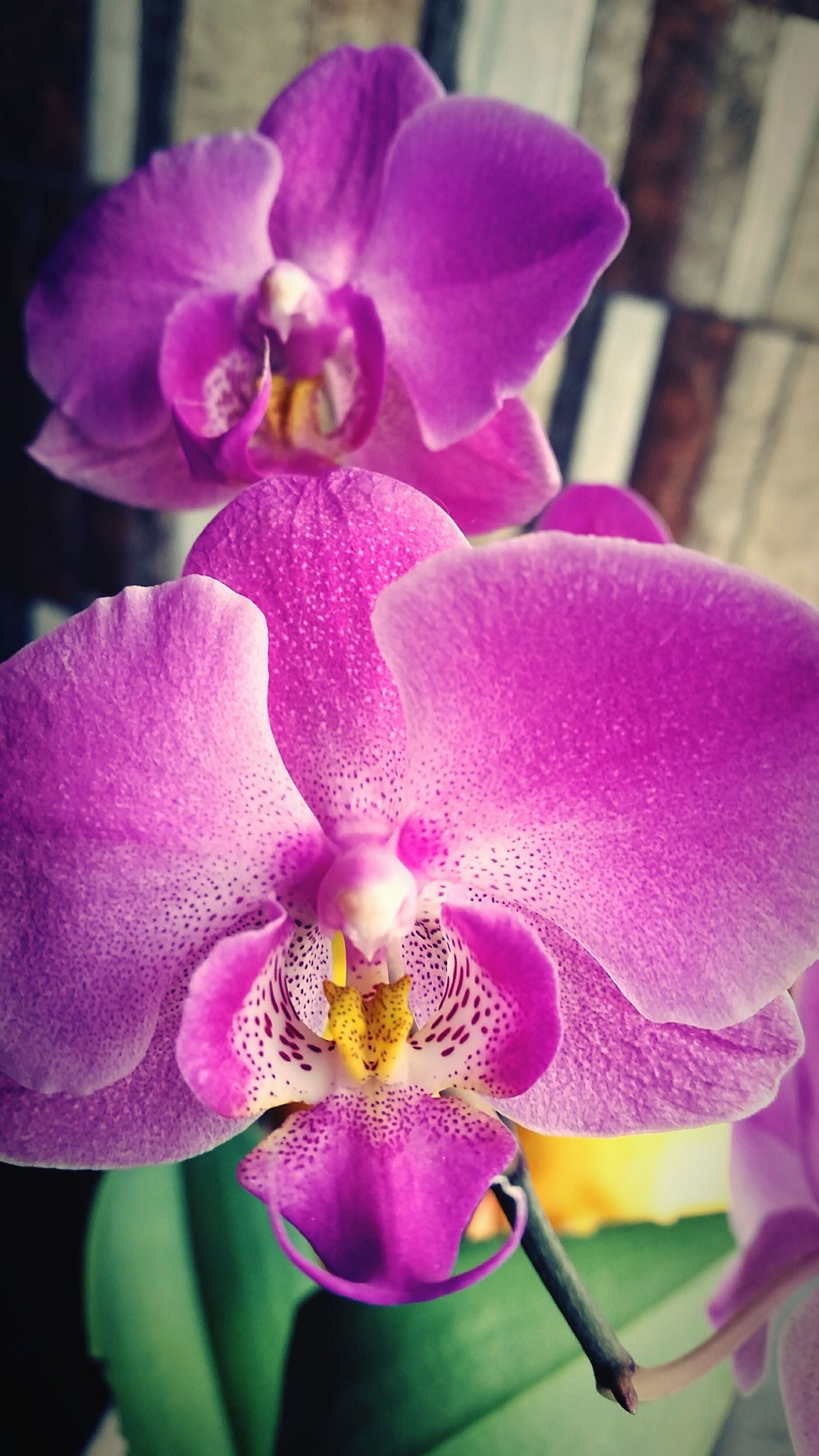 flower, petal, freshness, flower head, fragility, close-up, beauty in nature, growth, purple, focus on foreground, nature, blooming, pink color, orchid, stamen, plant, in bloom, pollen, blossom, single flower
