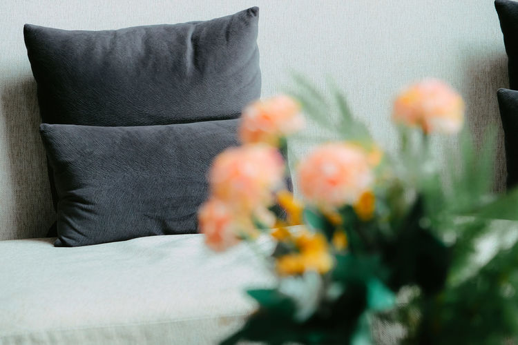 Close-up of flowering plant on sofa at home