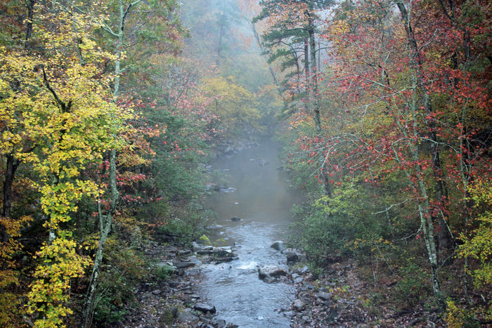 Misty Autumn Stream Forest Autumn Beauty In Nature Land Plant Water Change Nature No People Scenics - Nature Day Tranquil Scene Tranquility Flowing Water Fog Outdoors Environment WoodLand Flowing Stream - Flowing Water
