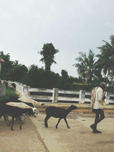 Follow the leader. Karnataka India Village Life Livestrong Lifestyle Mobile Photography Travel Photography First Eyeem Photo