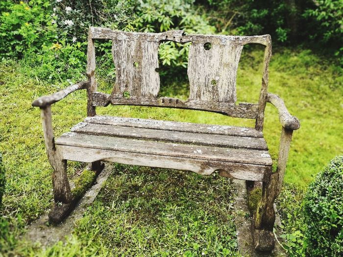 Im Garten. In the garden. Tree Grass Green Color Bench
