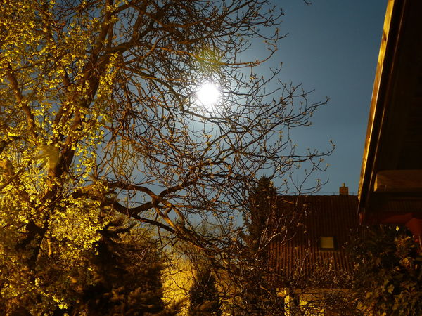 Architecture Beauty In Nature Bright Building Exterior Built Structure FoolMoon Full Moon Growth Low Angle View Moon Moon Shine Moonlight Moonshine Nature Night No People Outdoors Residential Building Residential Structure Sky Tranquility Tree