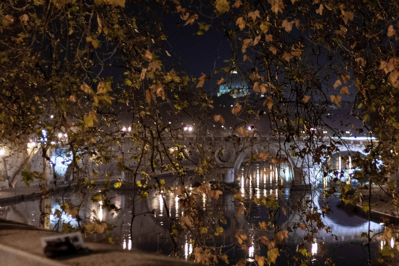 illuminated, tree, plant, architecture, night, nature, lighting equipment, water, reflection, city, no people, built structure, building exterior, outdoors, decoration, branch, lake, celebration, travel destinations