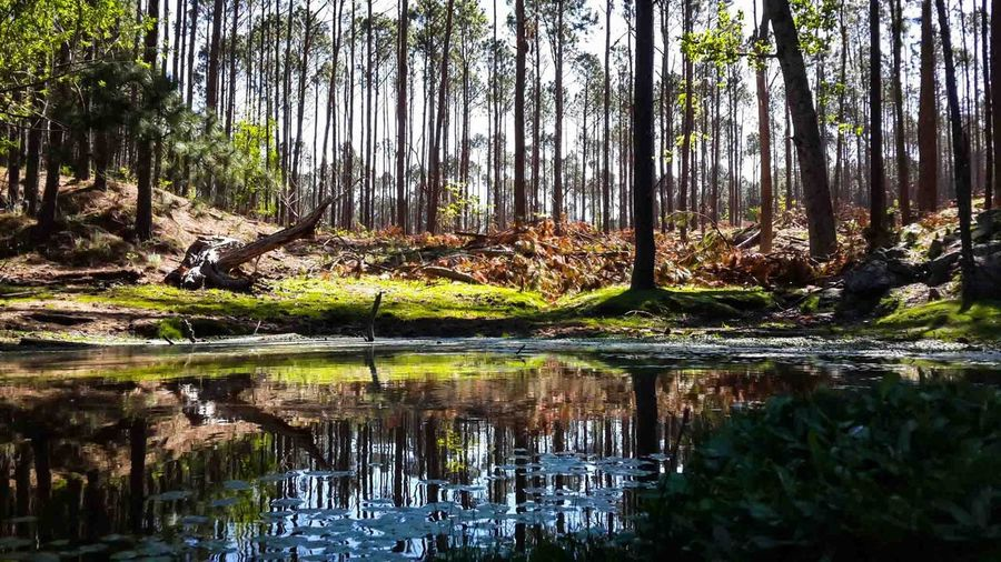 Reflections on water, La Cumbrecita, Córdoba, Argentina. Beauty In Nature Day Forest Growth Idyllic Lake Landscape Nature No People Non-urban Scene Outdoors Reflection Scenics Sky Tranquil Scene Tranquility Tree Tree Trunk Water