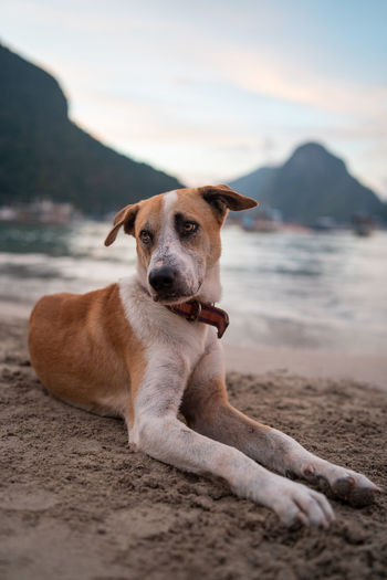 Canine Dog Pets Domestic One Animal Domestic Animals Mammal Animal Beach Animal Themes Land Relaxation Sand Vertebrate Portrait Water Mountain Nature Looking At Camera Sea No People Contemplation