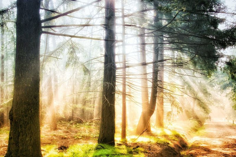 Shine! Day Sunlight No People Tree Nature Outdoors EyeEm Gallery Eyeemphotography Eye4photography  Eye4photography  Scenics Beauty In Nature Brightly Lit Sunbeam Forest Lost In The Landscape