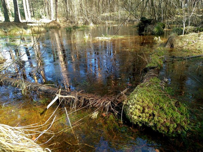 Природа пасха болото Выкса First Eyeem Photo