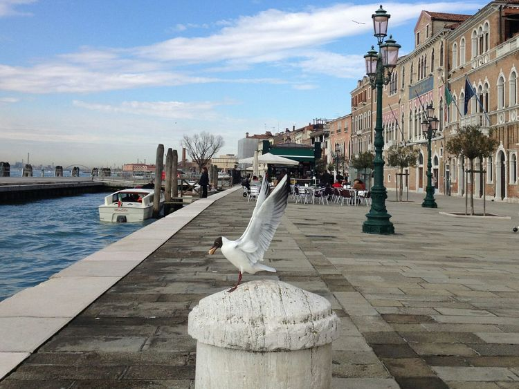 Outdoors Venice Venezia Seagull Zattere Spring Sun Seagulls In Flight Wings Bird Eating Seagull Eating
