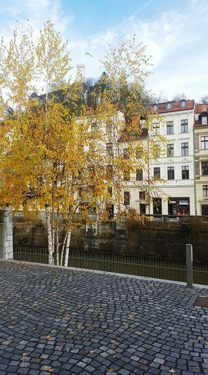 Autumn Colors In Ljubljana Birch Trees Ljubljana Castle Ljubljanica