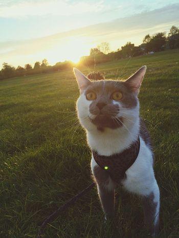 Cat Animal Photo Park Viscom