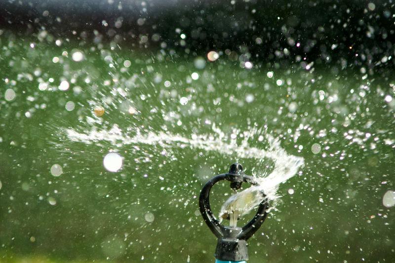 Water splashing on plant during rainy season