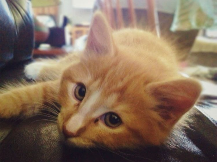 Kitty Cat Innocent Adorable = Buttercup!!
