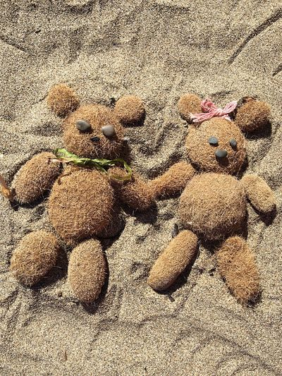 Background Backgrounds Love Lovely Summer Holidays Funny Summertime Beach Peluches Sand Fun Sand & Sea Shell Lifestyles Wallpaper Bear Little Bear Animal Color Palette