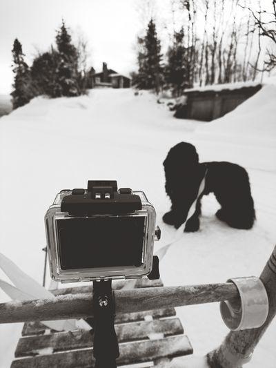Kick Actioncamera Dog Snow Wintertime