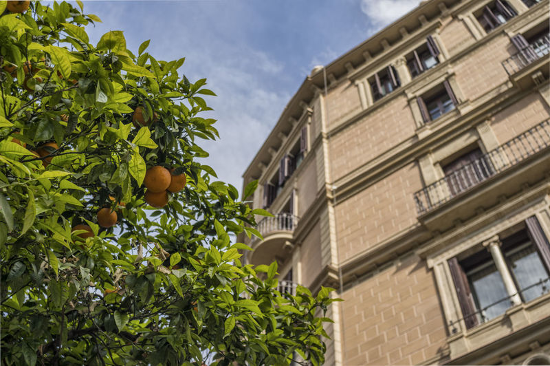 Orange tree in the city [Tokina WA 28mm f/2.8] Architecture Building Built Structure City City City Life Day Green Color House Orange Orange Tree Plant Residential Building Sky Tree Tree In The City Window