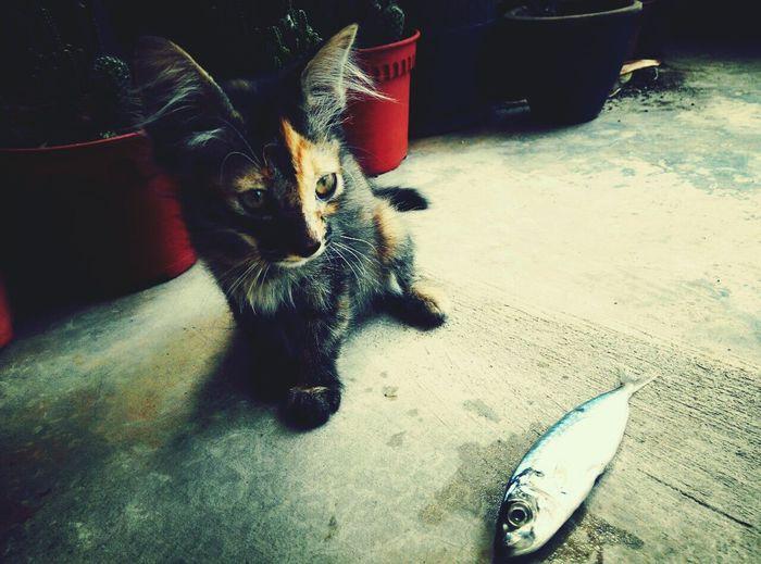 Cat Cats Of EyeEm Cats Mycat Catlovers Catandfish