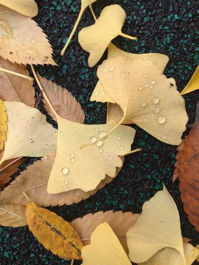 Autumn🍁🍁🍁 Autumn Leaves Yellow Color Fallen Leaves No Filter, No Edit, Just Photography Eyem Nature Lovers  IPhoneography High Angle View Close-up No People Day Nature Leaf Plant Part Beauty In Nature Directly Above Sunlight Backgrounds Plant