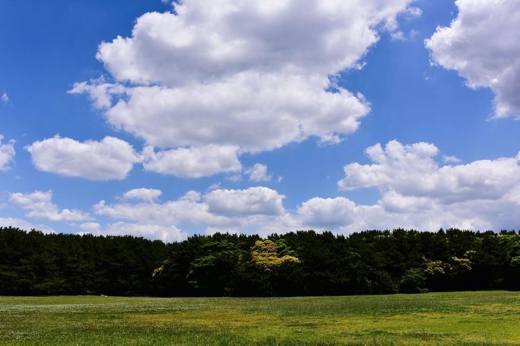 今日もヨガから Clouds And Sky Yoga Time Nature Morning Secret Base Tree Sky Grass Grass Area Field Countryside