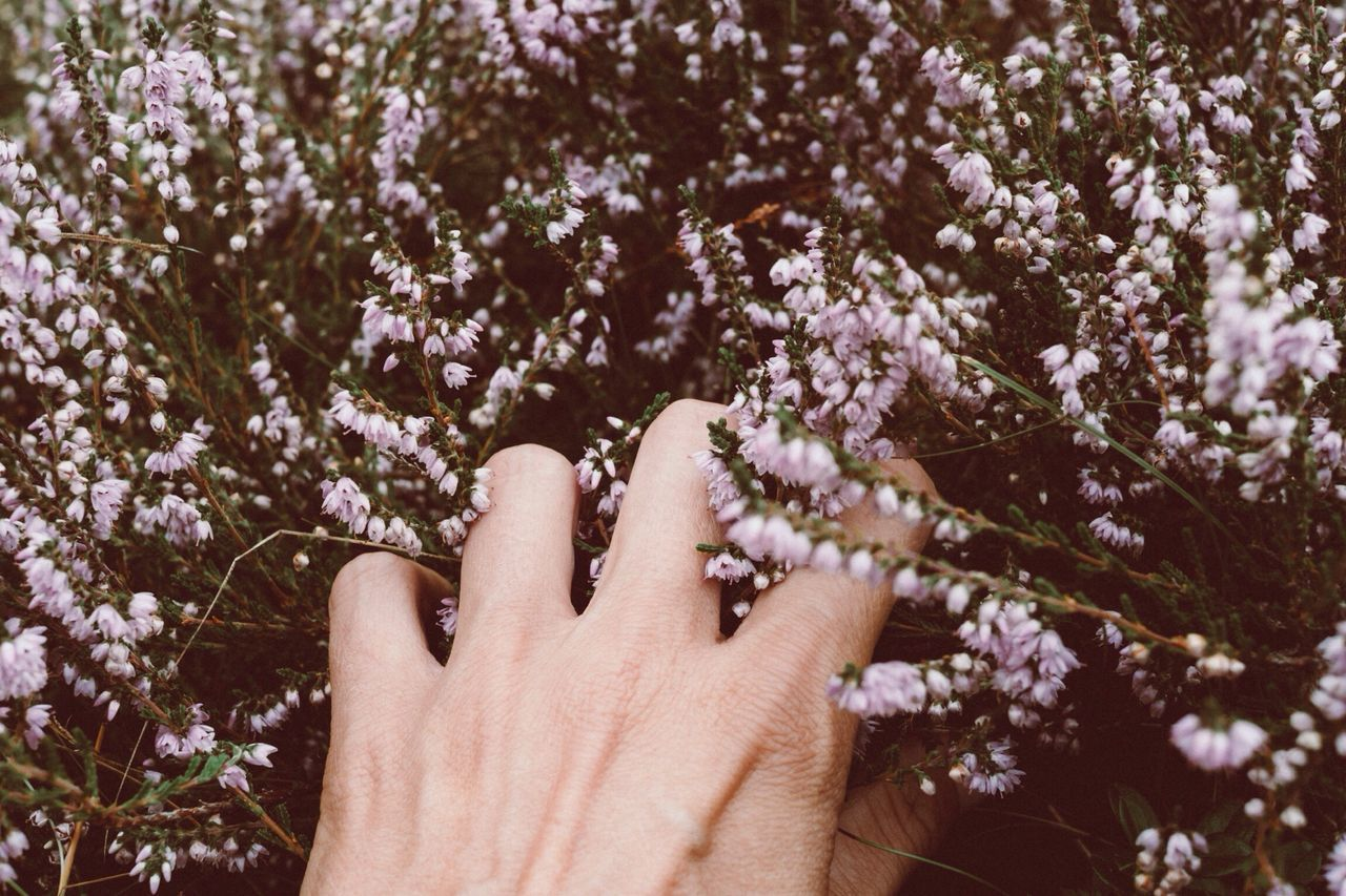 Woman hand with flowers