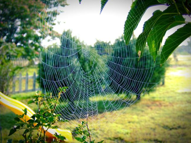 2 of 3 In color.. From My Archives EyeEm Best Shots - Landscape EyeEm Nature Lover Eye4nature EyeEm Landscape Eye4photography  Tadaa Community EyeEm Spider Web Songs I Love https://youtu.be/rNP2zIVnxQI